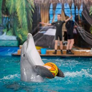 Дельфинарии, океанариумы Джубги