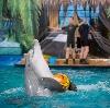Дельфинарии, океанариумы в Джубге